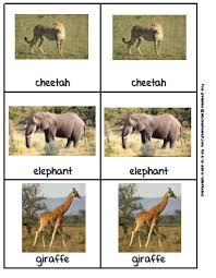 zoo animal picture cards a to z stuff printable pages