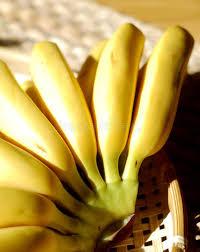 tiny banana bunch of bright yellow tiny bananas on bamboo basket stock image
