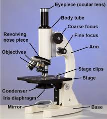compound light microscope uses use and care of the compound light microscope assist