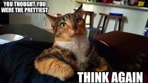 Sassy Cat Meme - sassy cat album on imgur