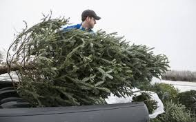 where to recycle your christmas trees this year the wichita eagle