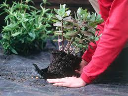 choosing the right garden mulch