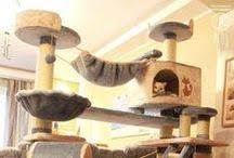 Make Your Own Cat Tree Plans Free by Shellyb Cool Cat Tree Plans Coolcattrees On Pinterest