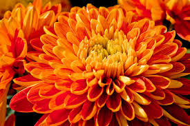 Pretty Orange 45 Pretty Flowers In The World With The Names And Pictures