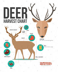 deer hunting tips best weapons safety questions and expert u0027s advices