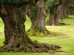 15 interesting tree trunk pictures