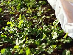 what u0027s growing in the winter garden greensboro montessori