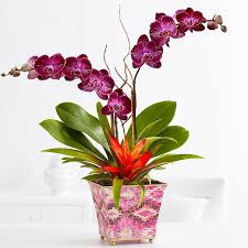 Indoor Tropical Plants For Sale - indoor plants house plants