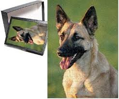 belgian sheepdog calendar buy by megacalendars belgian shepherd dog calendar just belgian