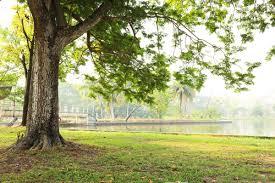albero giardino alberi non sporcano foto pollicegreen