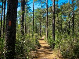 Map Of Ocala Fl Ocala National Forest Florida National Scenic Trail