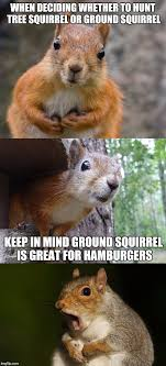 Pun Meme - bad pun squirrel imgflip