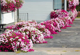 Home Garden Design Tips by Flower Garden Design For Front Of House Home Decorating Ideas And