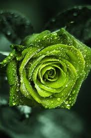 types of green color free shipping 2014 new type green rose 100 pcs green color rose