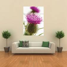 scottish thistle scotland giant wall print poster g474 amazon co