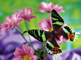 butterfly with flowers background hd 9854
