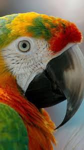 1913 best parrots images on pinterest beautiful birds animals