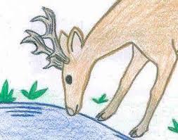 coloring pages rainforest alliance