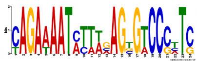 Meme Motif - motifs gene brca1