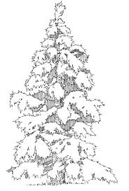 evergreen tree outline coloring home