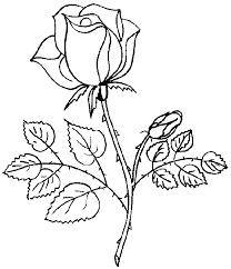 imagenes para colorear rosas de preciosa rosa para colorear