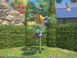 ornamental bamboo chocobo construction co