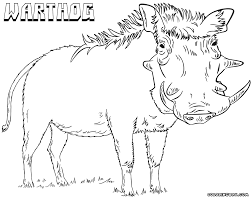 warthog coloring pages coloring pages to download and print