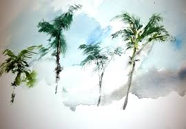 sketching los angeles palm trees january 22 2011 recollections