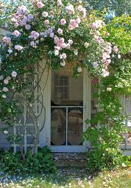 Trellis For Climbers 9 Ways To Create Curb Appeal With Flowering Vines And Climbers