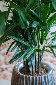 native plants canberra 11 best canberra trees images on pinterest plant native plants