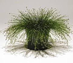 151 best garden ornamental grass s images on gardens