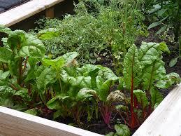 vegetables the edible terrace