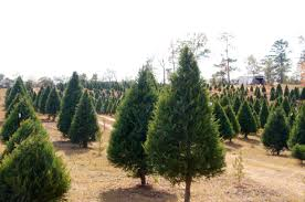 yuletide tree farm is a place to make memories