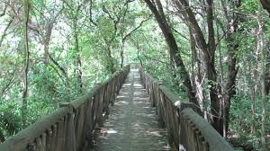 the walkway through the bushes and trees picture of lowveld