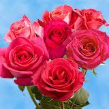 global roses roses global