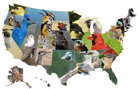 Map Of State by Map Of State Birds Oc 1513x983 Mapporn