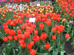 the most beautiful spring garden in the world picture of