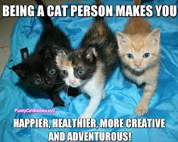 being a cat person funny kitten meme