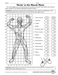 muscular system worksheet nursing pinterest muscular system