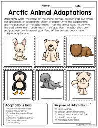 animal adaptations anchor chart science pinterest