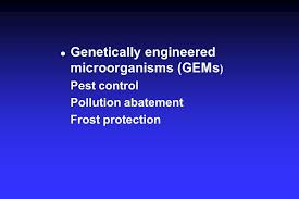 field application of a genetically engineered microorganism for