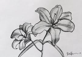 pencil sketch in flower how to draw and sketch hibiscus flower