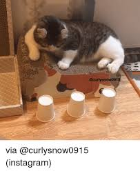 Grumpy Cat Snow Meme - 25 best memes about grumpy cat grumpy cat memes