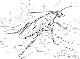 german cockroach coloring page free printable coloring pages