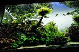 une plongée dans la nature par takashi amano le journal de l