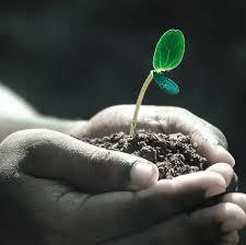 michigan native plant nursery subscriptions design permaculture design magazine plant