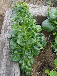 blog archives gardening in la