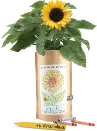 sunflower kit garden in a bag kids gardening kits