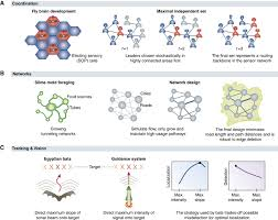 algorithms in nature the convergence of systems biology and