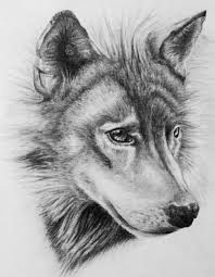 wolf drawing by dannyhouse on deviantart
